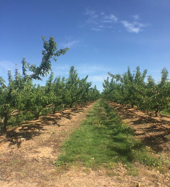 Les vignes toquées sont une balade entre les vignes qui mêlent marche, vins et gastronomie