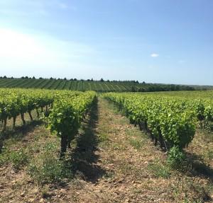 en plein coeur des vignes, un cadre idéal pour déguster des vins de région et des plats signatures