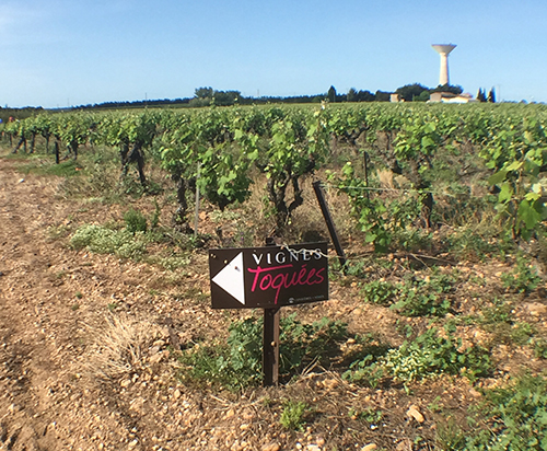 une balade gourmande de 7km où les promeneurs doivent suivre les pancartes installées dans les vignes