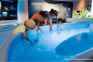 L'aquarium Mare Nostrum à Montpellier à mis en place un bassin tactile permettant aux visiteurs de toucher les poissons