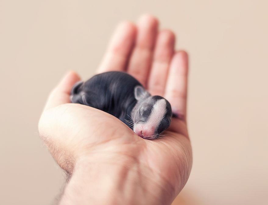 le bébé lapin à sa naissance