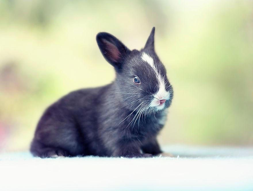 le bébé lapin se dresse sur ses pattes