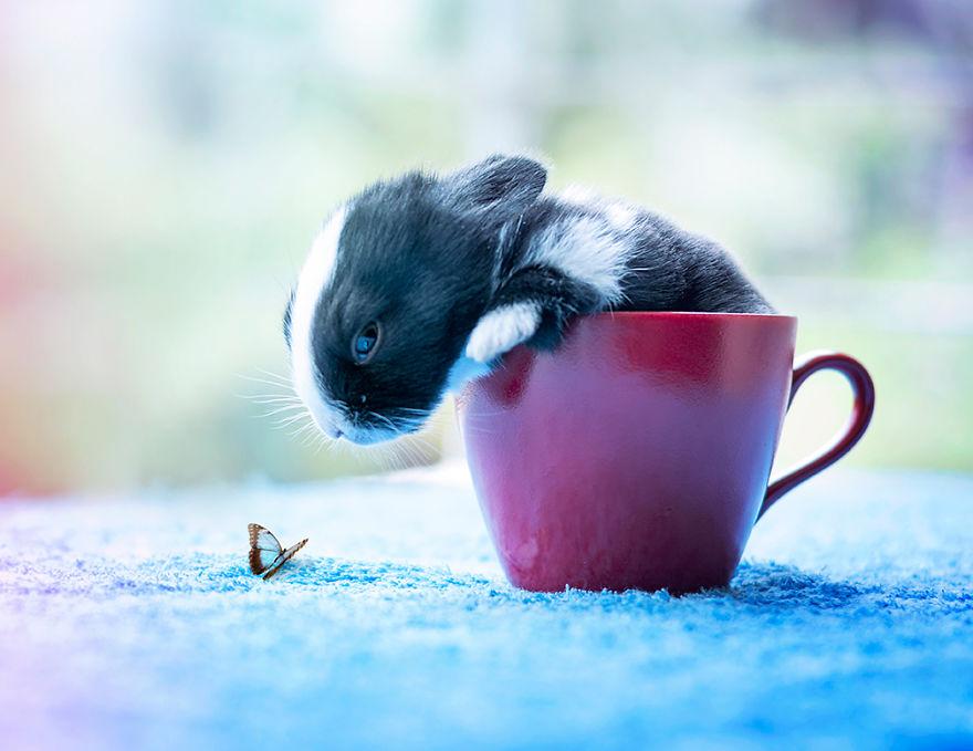 le bébé lapin fait connaissance avec la nature