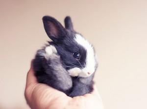 le bébé lapin tient dans une main
