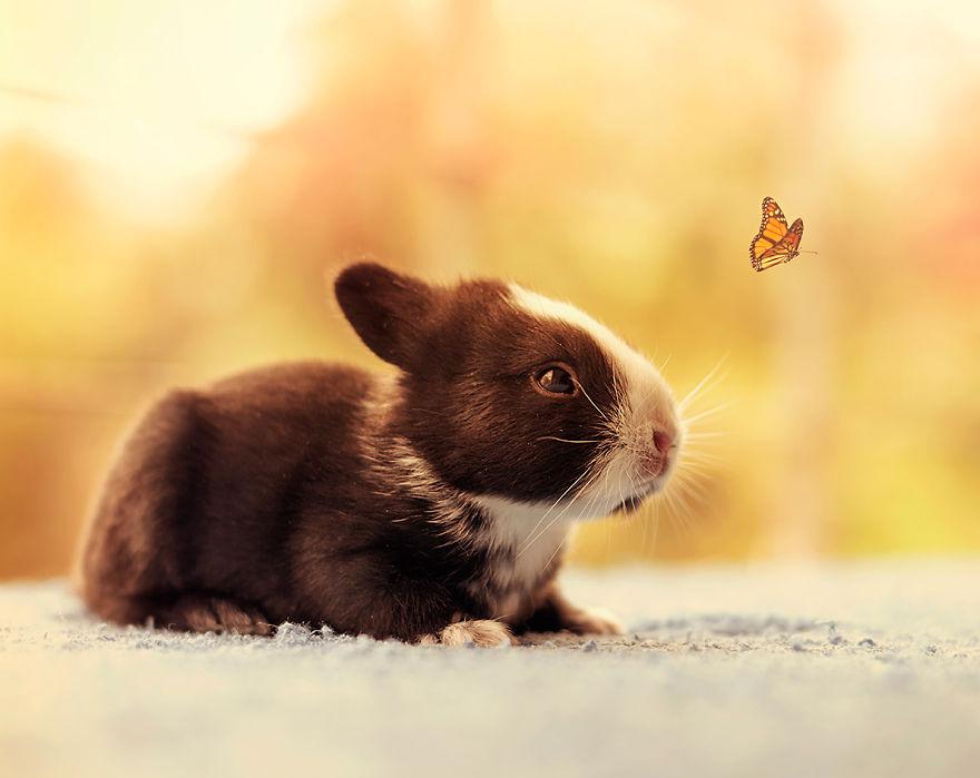 le bébé lapin suit un papillon