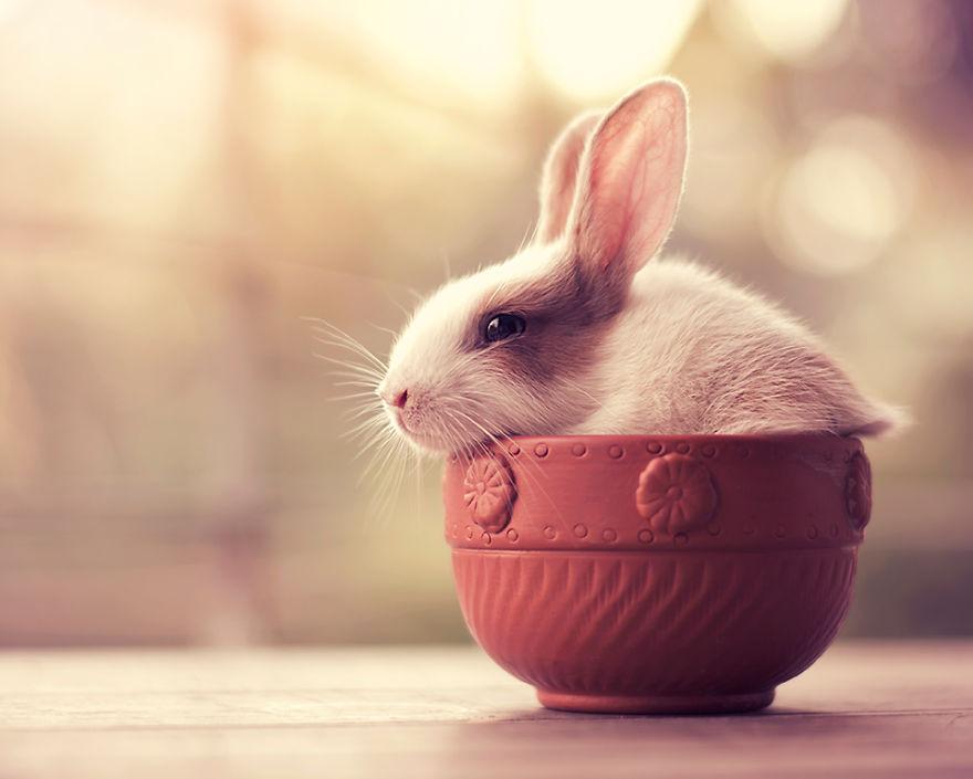 le lapin se repose dans un pot