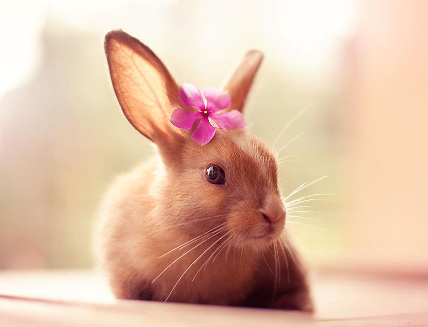jolie lapine tahitienne