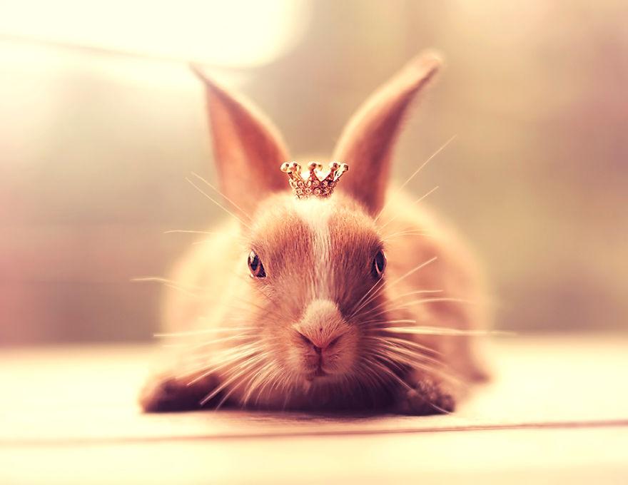 princesse lapine est dans la place