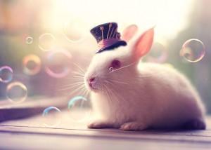 Tout droit sorti de Alice au Pays des merveille ce monsieur lapin