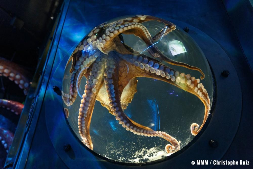 La pieuvre geante dispose de 8 tentacules, chacun ayant son propre ...