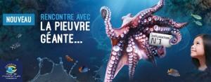 Une expérience unique et fantastique vous attend à l'aquarium mare nostrum de Montpellier avec l'arrivée de cette pieuvre géante surprenante et mystérieuse