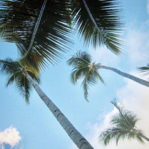 La République Dominicaine a l'avantage de regrouper plusieurs critères : il y fait beau et chaud en hiver,