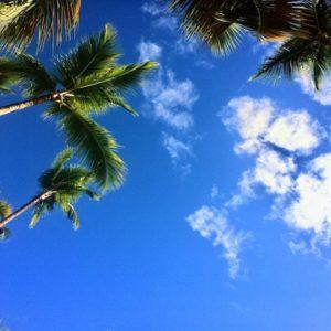 Les cocotiers et le ciel bleu, parfait pour la farniente