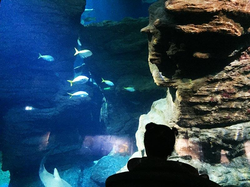 Une petite fille qui s'émerveille devant les poissons du Planet océan de Montpellier