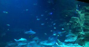 bassin panoramique en fin de parcours pour un moment de sérénité au planet océan montpellier