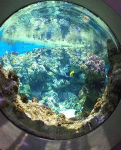 immersion marine au planet océan montpellier