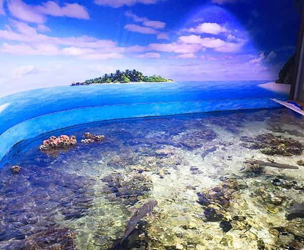 espace lagon assure un dépaysement assuré au planet océan montpellier