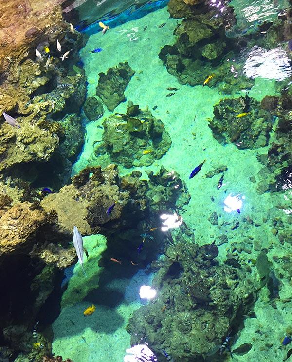 eau transparente pour observer les diverses variétés de poissons