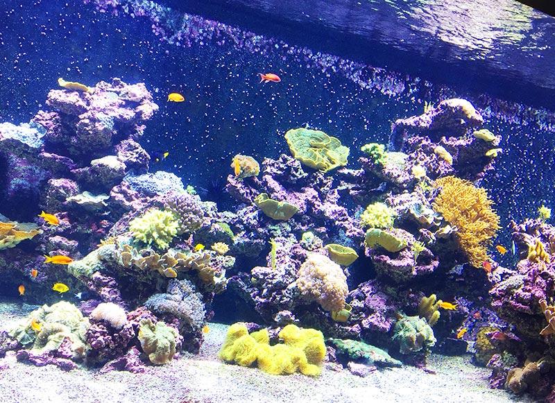 des aquarium plein de couleur pour émerveiller les enfants au planet océan montpellier