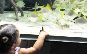 de jolis poissons exotiques pour émerveiller les enfants au planet océan montpellier