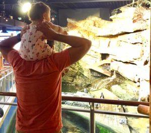une petite fille émerveillée devant les manchots du cap avec son papa