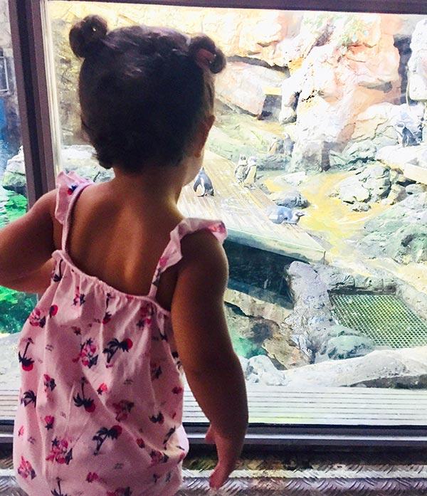 une petite fille qui appellent les manchots du cap des cocottes