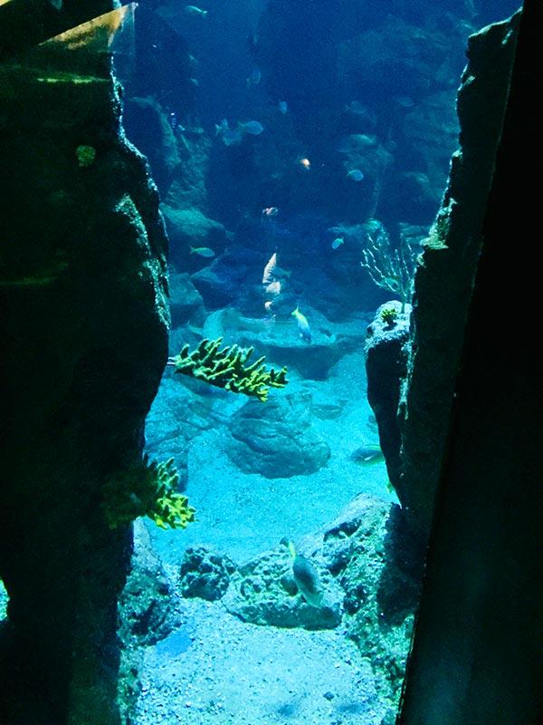 les profondeurs marines se dévoilent au fil du parcours du planet océan montpellier