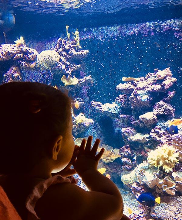une petite fille qui découvre les poissons colorés du planet océan montpellier
