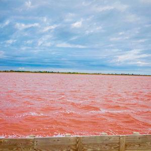 """l'eau du salin est rose grâce à une algue microscopique qui prolifère dans les marais, la """"dunaliella salina""""."""