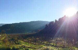 les jolies paysages autour de la maison à Ménerbes